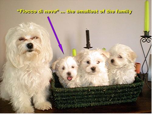 Fiocco di neve-family