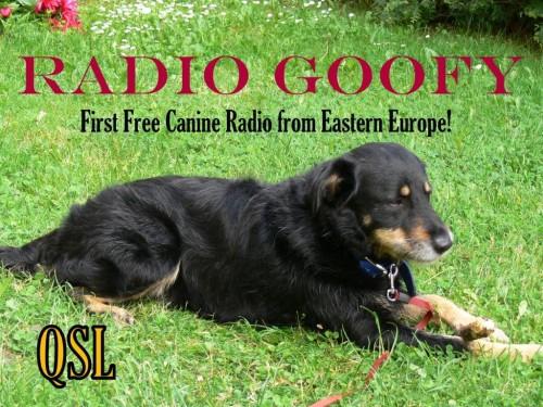 Radio Goofy QSL 2-1 (2)